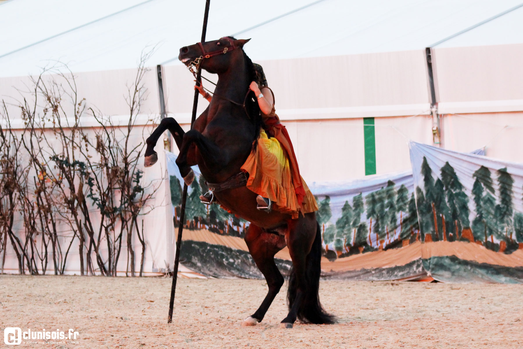cabaret-equestre-haras-cluny-ete-2016-11