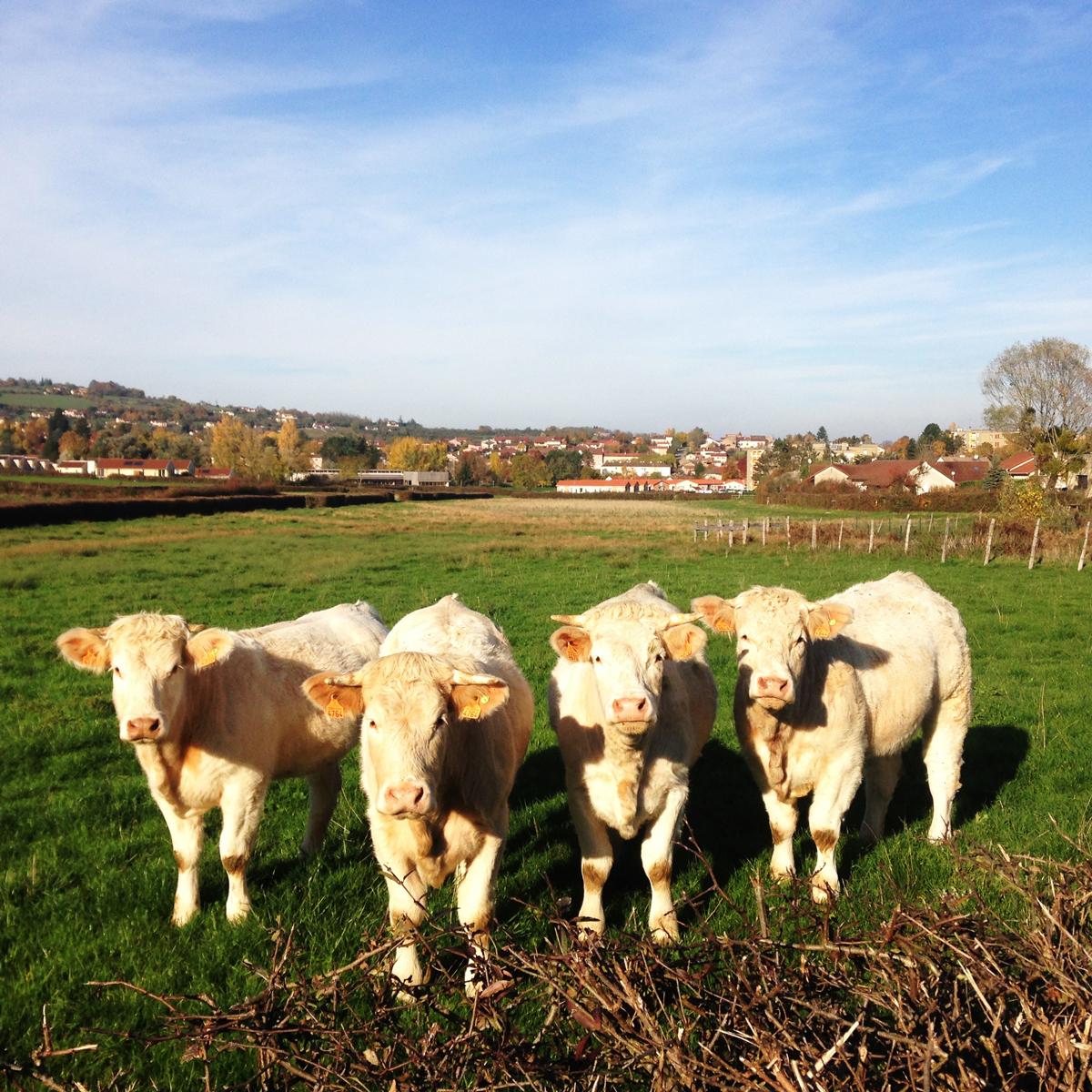 L agriculture en clunisois for L agriculture